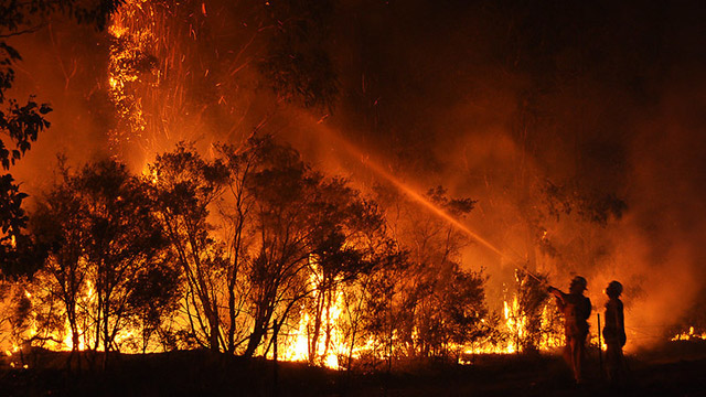 Fire fighters attempting to control a bushfire